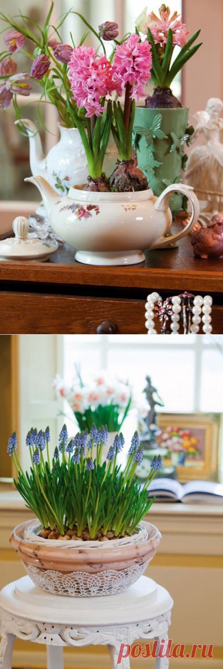 Полезные советы по зимней выгонке тюльпанов, нарциссов
