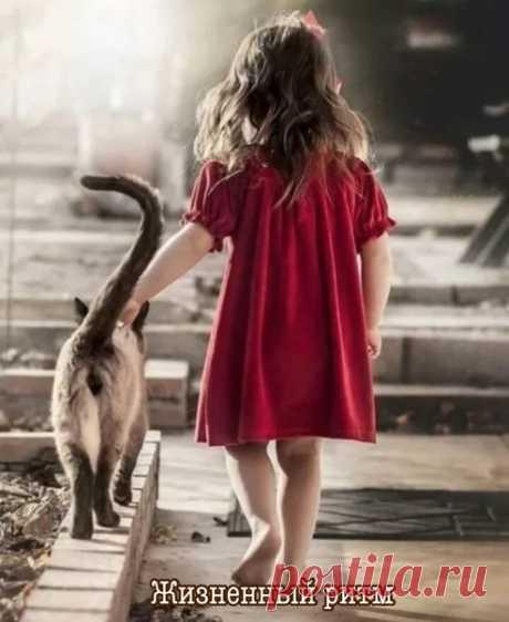 Человеку нужен кот. Кот его всегда поймет, даже если сложный случай в жизни вдруг произойдет...  Ата Манова