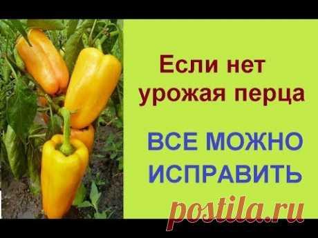 #перец Я рассказываю, чем поливаю сладкий перец для быстрого роста, созревания и увеличения урожая. Правильное выращивание перца надо начинать с формирования...
