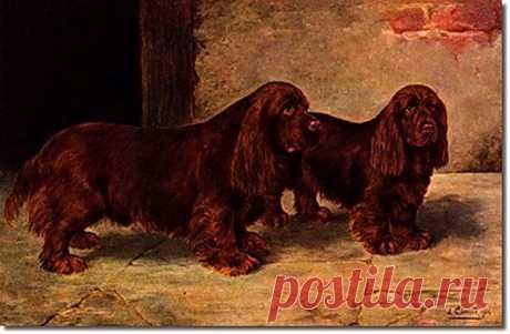 Собаки в изобразительном искусстве, часть 19 – Блог. Run, пользователь Марина Николаева   Группы Мой Мир
