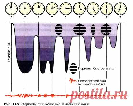 биоритмы мозга во время сна после пробуждения во время бодрствования: 10 тыс изображений найдено в Яндекс.Картинках