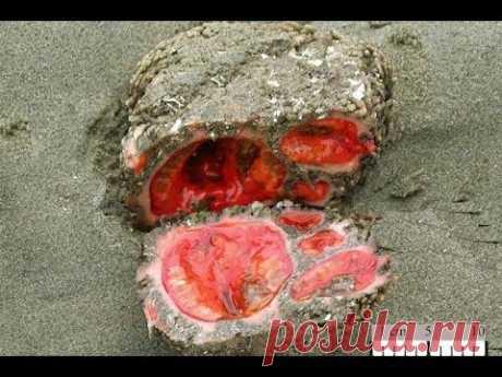 💣 Живые камни: невероятная форма жизни, которую могли подкинуть только инопланетяне! ⚡- YouTube