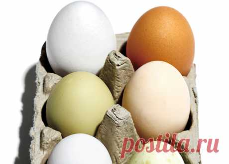 The truth about eggs: 3 facts which you have to know