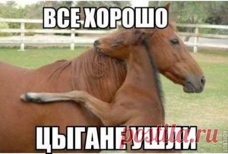 Смешные фото и картинки / Приколы