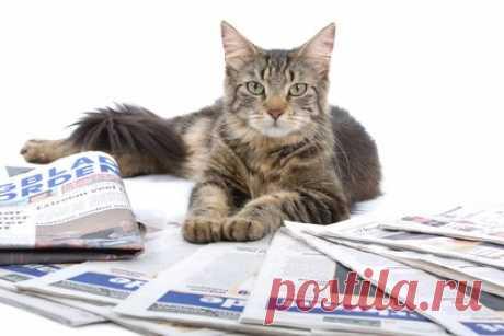 Всё о кошках и котах