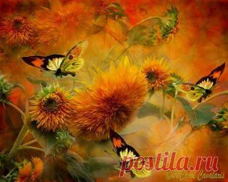 Бабочки на желтом