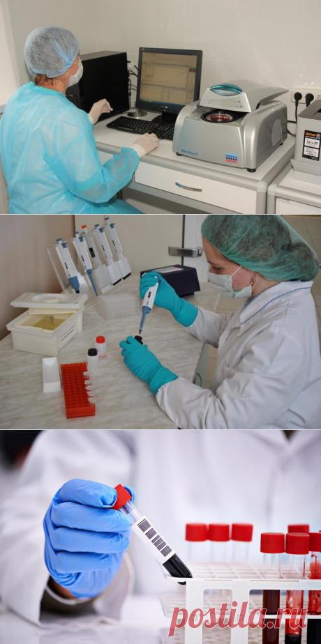 Значение лабораторных биохимических исследований в диагностике болезней животных - БиоКорова
