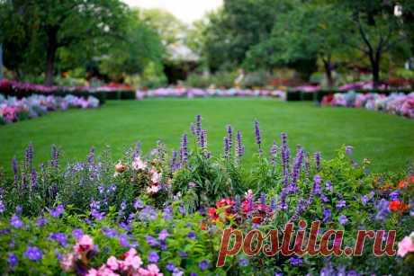Дизайн цветочной клумбы. ТОП-10 простых и эффективных приемов