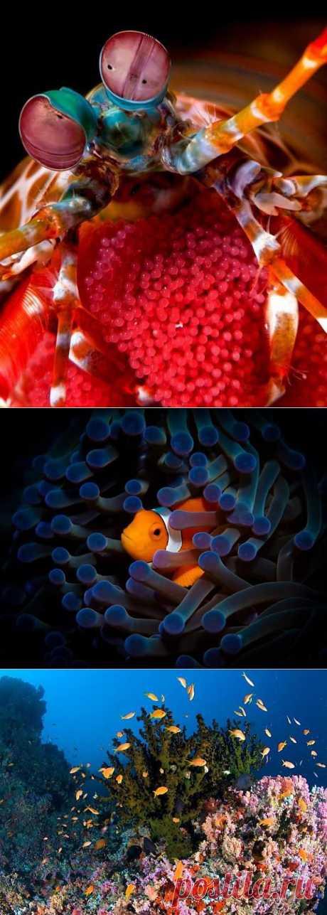 (+1) тема - 20 потрясающих примеров подводной фотографии | Занимательный журнал