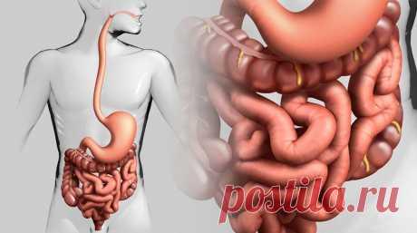 Как естественным образом вылечить кишечник Есть много особенностей современного образа жизни, которые нарушают кишечный микробиом. Воздействие этих вредных факторов широко распространено в нашем обществе. Стандартная современная диета,