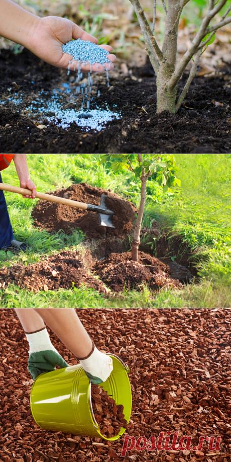 Пора активного роста. Какие работы предстоят садоводам в июне? | Огород | Дача | Аргументы и Факты