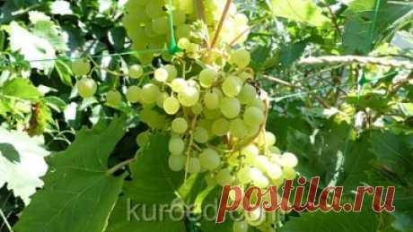 РЕЦЕПТЫ | Мармелад из винограда