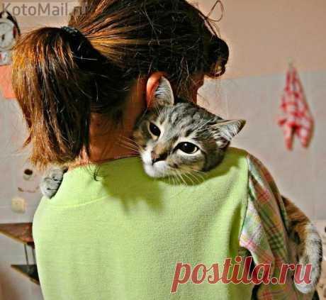 Любовь котика такая искренняя и милая