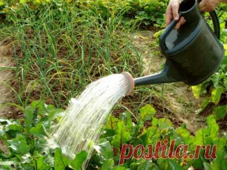 Почему не стоит поливать растения днём?   В мае нужно поливать растения только при посадке. Затем этот вопрос возникает в конце июня — начале июля, когда действительно бывает засуха. Но тут всё просто: каждый поливает, когда может. Но всё ж…
