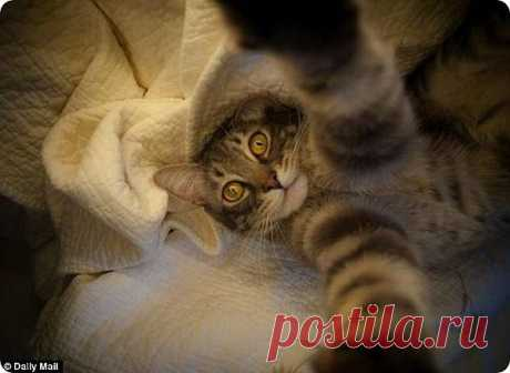 Кошачьи автофотопортреты   Четвероногий юмор
