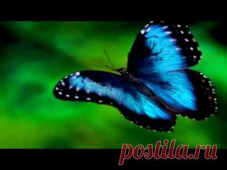 Бабочка  Музыка Сергея Чекалина. Butterfly. Music of Sergei Chekalin.