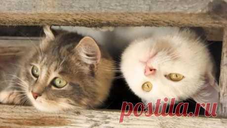Любопытные коты (24 фото) . Тут забавно !!!