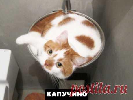 Самые распространенные формы котиков, встречающиеся в природе — Убойный юмор