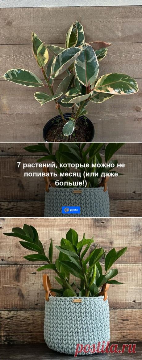 7 растений, которые можно не поливать месяц (или даже больше!) - Дом Mail.ru