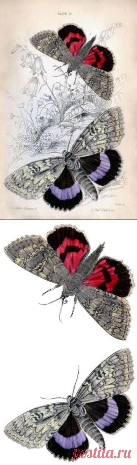 Instant Art Printable - Красочные Бабочки-Ночные Бабочки-Графическая Фея