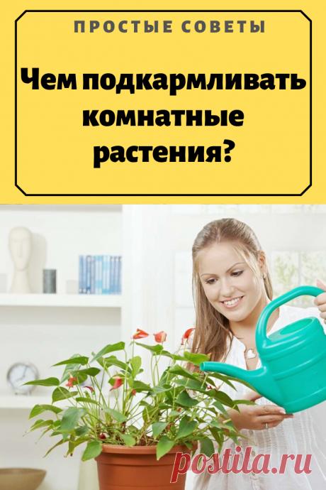 Чем подкармливать комнатные растения? – Простые советы