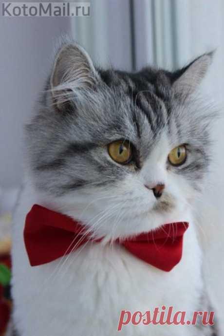 Обаятельный котик желает познакомиться!