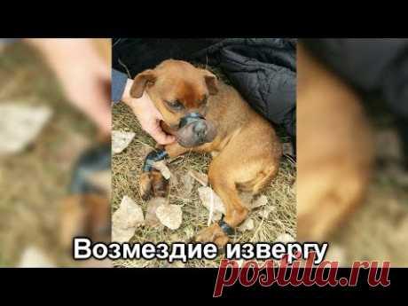 Возмездие извергу, который связал собаку изолентой и выбросил умирать. - YouTube