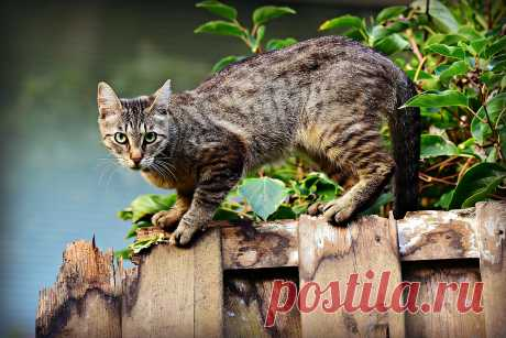 Довольно часто кошки трутся о ноги своих хозяев, что же это может значить?