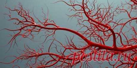 Как укрепить кровеносные сосуды: правильная диета