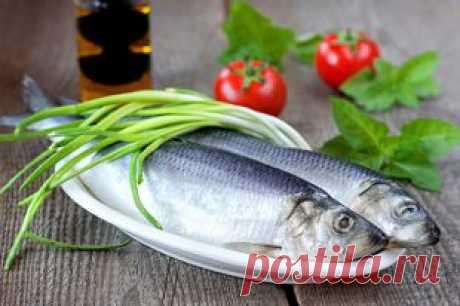День селёдки. Полезные советы по выбору, хранению и очистке рыбы | Продукты и напитки | Кухня | Аргументы и Факты