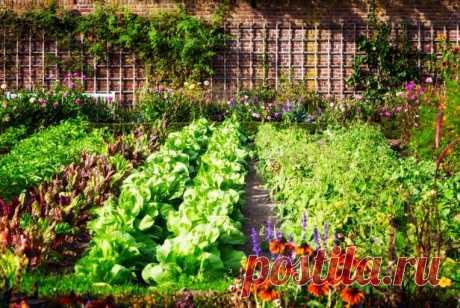 Схемы будущих посевов, или как правильно разместить овощи на своем участке Всех тех, кто является счастливым обладателем огорода, можно поздравить. Это и прекрасная бесплатная замена дорогих фитнес-залов, и возможность нахождения на свежем воздухе. А самое главное – это выращенные своими руками вкусные и полезные овощи и фрукты, со вкусом которых не сравнятся никакие...