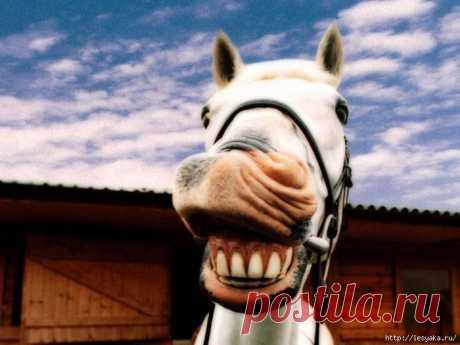 Животные, которые дарят большую улыбку).