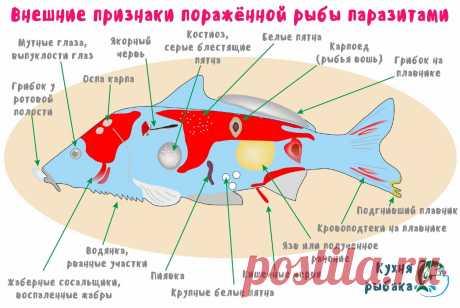 Паразиты пресноводных рыб, рыбакам на заметку! | Кухня рыбака | Яндекс Дзен