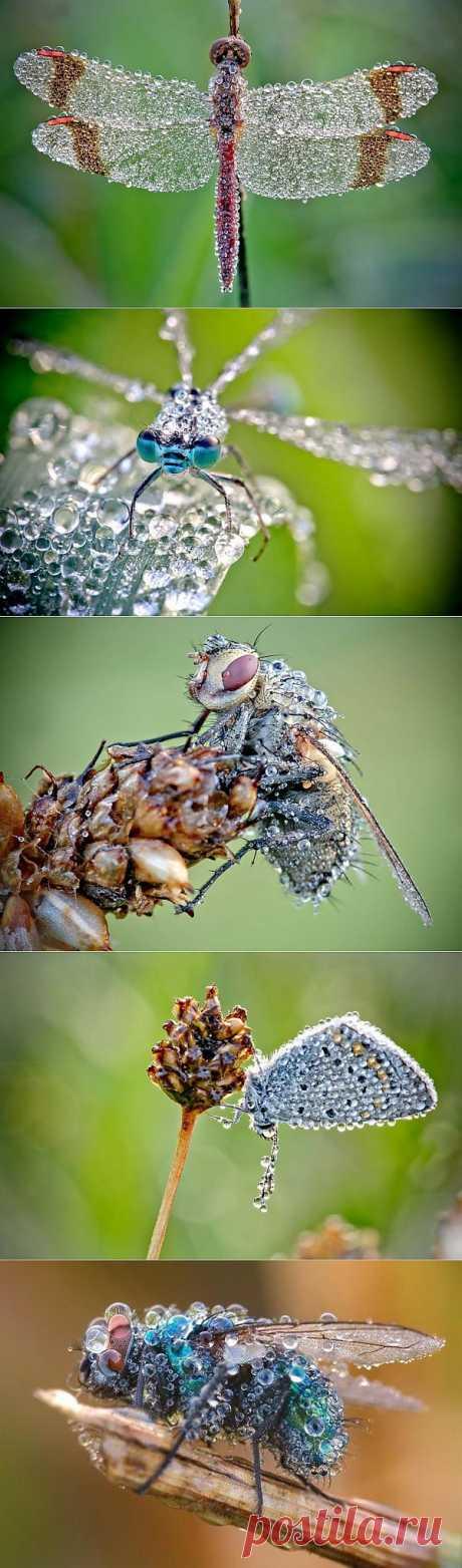 «Драгоценные» насекомые Давида Шамбона - Ярмарка Мастеров - ручная работа, handmade