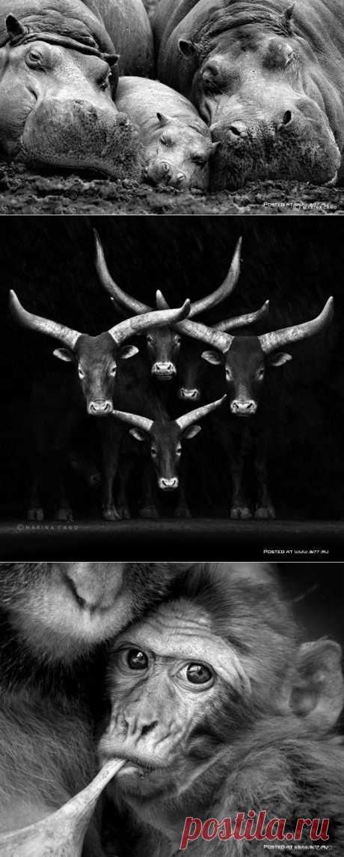 Невероятные портреты семейства животных