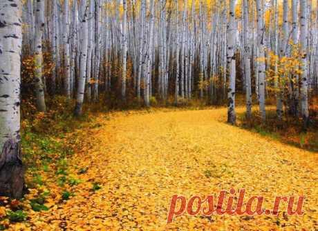 золотой ковёр в лесах Ленинградской области