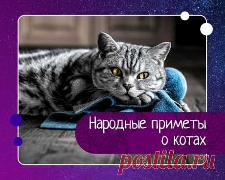 Народные приметы о котах