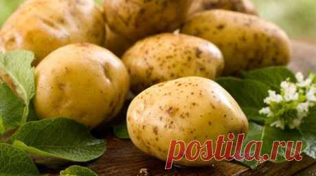Лечебные свойства картофеля и картофельная косметика | Разно Всяко