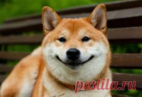 Собаки воспринимают речь таким же образом, как и человек, выяснили ученые | Живой мир - природа