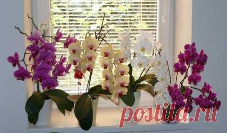 4 народных подкормки для орхидеи для обильного цветения