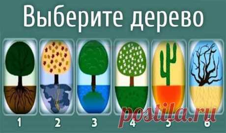 Выберите дерево, корни которого привлекли внимание! Тест супер!