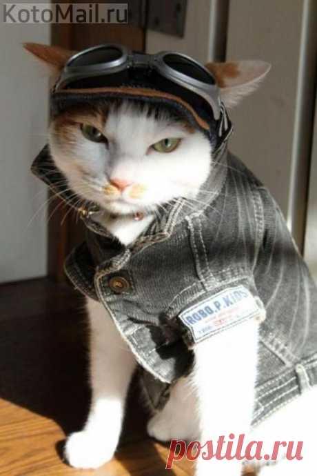 А я не лётчик! Я - стиляга!
