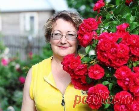 План подкормок садовых роз и борьба с болезнями