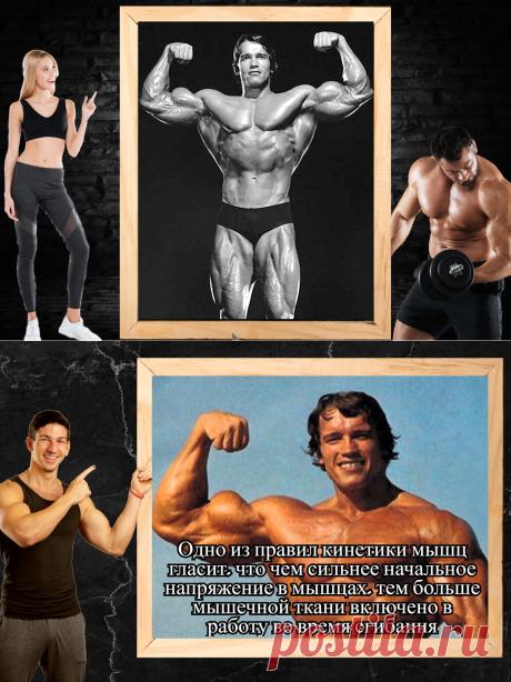 Как накачать бицепс? 4 эффективных упражнения из тренировочной программы Арнольда Шварценеггера