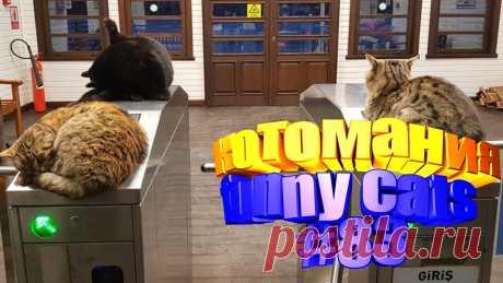 видео коты смешные, видео смешных котов, видео котов смешное, смешное видео кот, видео с котами, том кот видео, коты приколы видео, коты видео приколы, видео кота, животные смешные видео, смешные видео животных, животные видео смешное, животные смешно, смешных животных, приколы с котами, прикол с котами, приколы котами, коты прикол, кошки смешные видео, про кошек смешное, смешное видео кошек, видео смешных кошек, смешное видео кошка, смешно кошка, про смешно кошек, смешные кошка