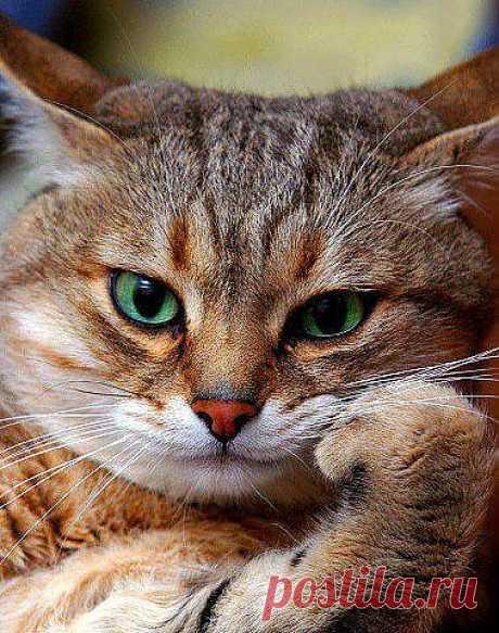 Мудрый кот - Приколы с животными