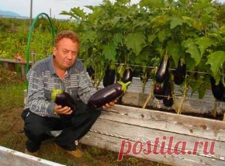 Удивительный огород Игоря Лядова видео и фото, обзор умного огорода