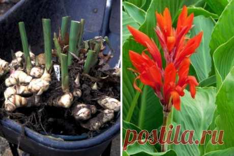 5 цветов, которые нужно проращивать заранее