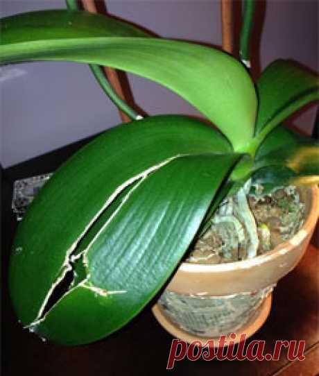 Болезни орхидей — фото и методы лечения