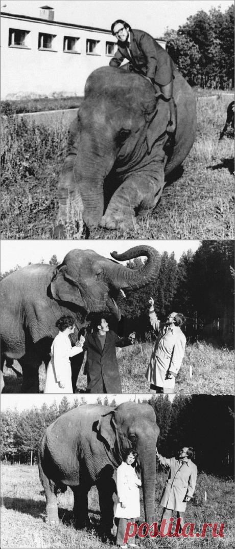 «На слона залезть – не в автобус сесть». В чем отличие мытого слона от немытого | Сто секретов репортёра | Яндекс Дзен. У репортера есть замечательная возможность сходить туда, куда других не пускают, и залезть на слона. Но однажды журналист взял жену, чтобы она тоже покаталась на слоне. И вот что вышло из этого из-за одной привычки слонихи…